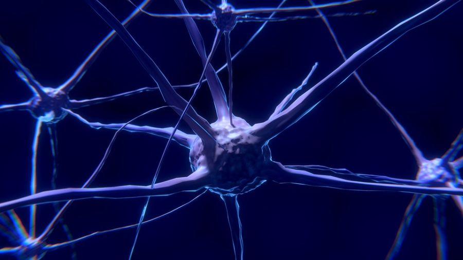 Proizvodnja neurona prestaje već sa 13 godina