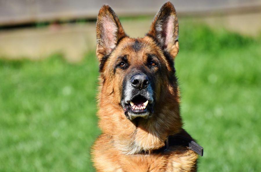 Jednu grupu ljudi psi češće grizu od ostalih