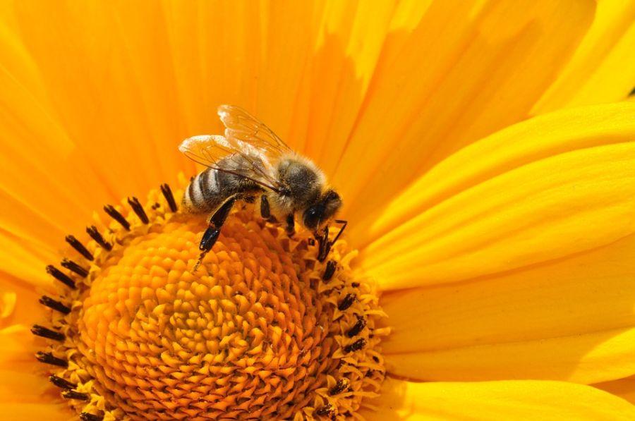 Pčele poseduju matematičku sposobnost